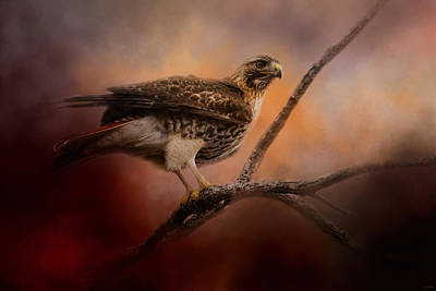 Red Tail Hawk Photograph - Red Tail Over The Road by Jai Johnson