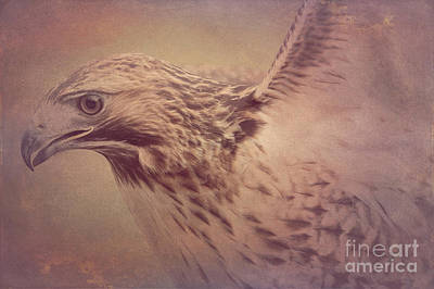 Photograph - Red-tailed Hawk 3 by Chris Scroggins