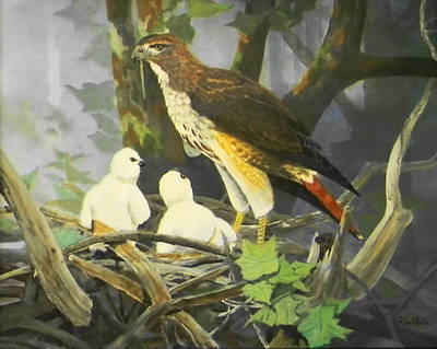 Painting - Red-tailed Hawk And Chicks Available by Jack Bolin