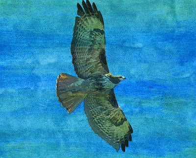 Red Tail Hawk Digital Art - Red Tailed Hawk Bird Raptor  by PixBreak Art