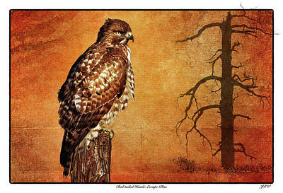 John Williams Digital Art - Red-tailed Hawk Escape Plan by John Williams