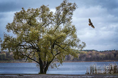 Photograph - Red Tailed Hawk by Joann Long