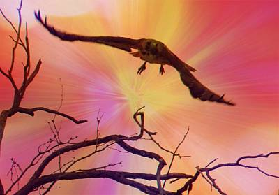 Photograph - Red-tailed Hawk Launch 2 - Artistic by Judy Kennedy