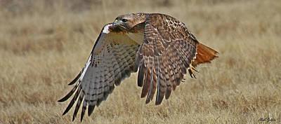 Photograph - Red-tailed Hawk Mug by Bob Zeller