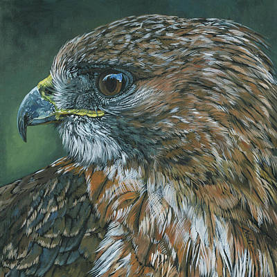 Painting - Red-tailed Hawk by Nadi Spencer