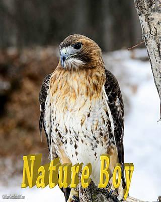 Buzzard Photograph - Red Tailed Hawk Nature Boy by LeeAnn McLaneGoetz McLaneGoetzStudioLLCcom