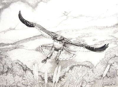 Red Tail Hawks Drawing - Red-tailed Hawk Of Psalm 104 by Jill Iversen