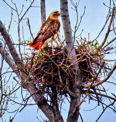 Photograph - Red-tailed Hawk On Nest by Anna Louise