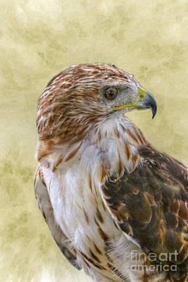 Red Tail Hawk Digital Art - Red Tailed Hawk by Randy Steele