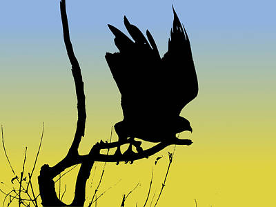 Drawing - Red-tailed Hawk Taking Flight Silhouette At Sunrise by Marcus England