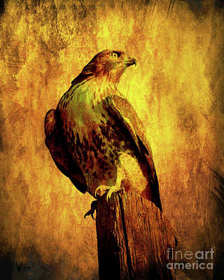 Hawk Birds Digital Art - Red Tailed Hawk . Texture . 40d10167 by Wingsdomain Art and Photography
