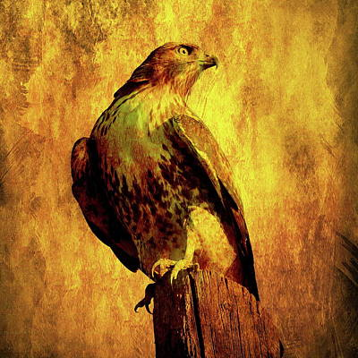 Bif Photograph - Red Tailed Hawk . Texture . Square . 40d10167 by Wingsdomain Art and Photography