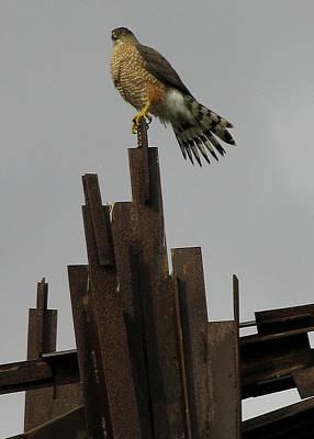 Red-tailed Hawk Print by Vari Buendia