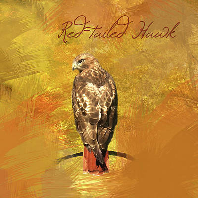 Hawk Birds Digital Art - Red-tailed Hawk Watercolor Photo by Heidi Hermes
