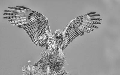 Photograph - Red Tailed Hawk Wings by Rick Mosher
