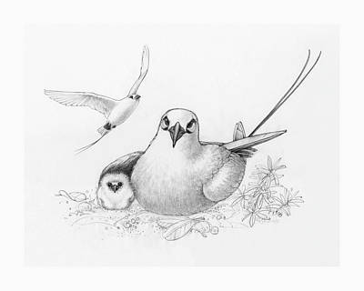 Drawing - Red-tailed Tropicbirds by Judith Kunzle