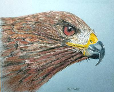 Painting - Red Taill Hawk by Joan Mansson