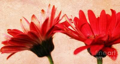 Gerbera Daisy Photograph - Red Texture by Clare Bevan