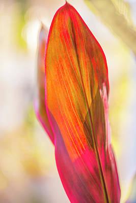 Digital Art - Red Ti Leaves 07 by Gene Norris