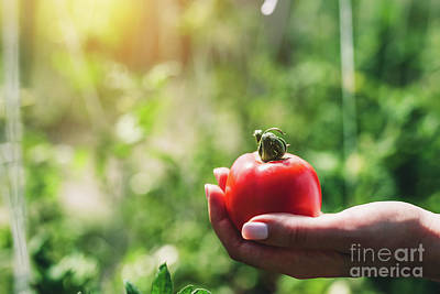 Photograph - Red Tomato Held By Woman's Hand by Michal Bednarek
