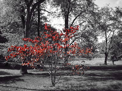 Burning Bush Photograph - Red by Toni Jackson