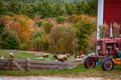 Photograph - Red Tractor And Sheep In Fall Foliage by Jeff Folger