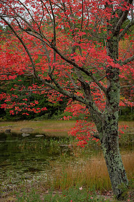Photograph - Red Tree II by Gary Lengyel