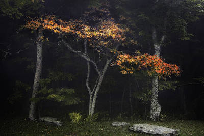 Photograph - Red Tree In Fog by Ken Barrett