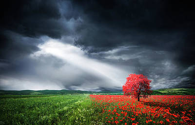 Photograph - Red Tree In Meadow With Poppies by Bess Hamiti