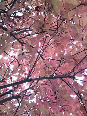 Photograph - Red Tree Leaves Photo 3 From Underneath Looking Up by Julia Woodman