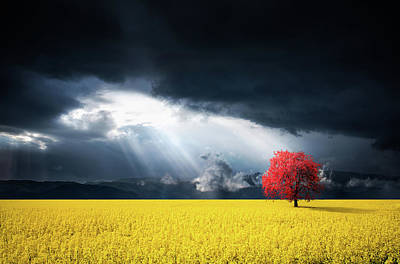 Red Tree On Canola Meadow Art Print