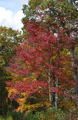 Photograph - Red Trees And Gold Autumn by rd Erickson