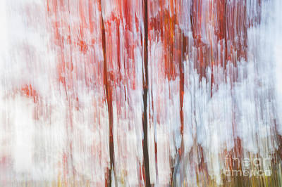 Impressionism Photos - Red trees by the lake by Elena Elisseeva
