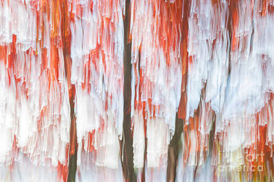 Impressionism Photos - Red trees on lake shore by Elena Elisseeva