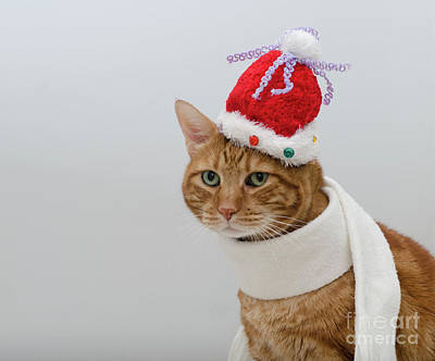 Photograph - Red Tubby Cat Tabasco Christmas Hat by Irina ArchAngelSkaya