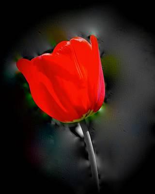 Walter Gantt Wall Art - Photograph - Red Tulip     by Walter Gantt
