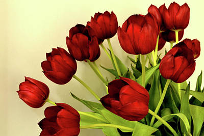 Photograph - Array Of Red Tulips II by Nadalyn Larsen