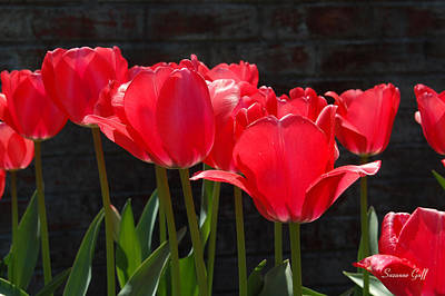 Floral Photograph - Red Tulips - Essence Of Springtime I by Suzanne Gaff