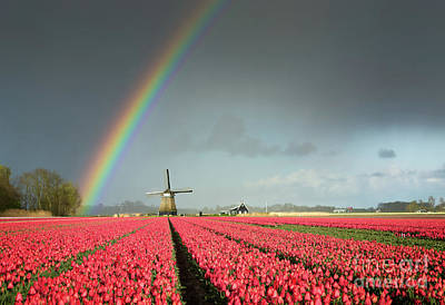 Photograph - Red Tulips, A Windmill And A Rainbow by IPics Photography