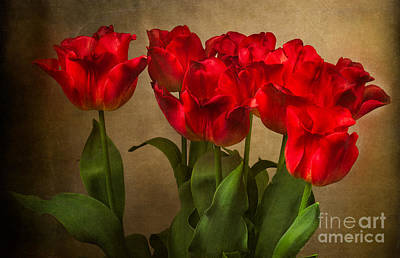 Photograph - Red Tulips by Ann Jacobson