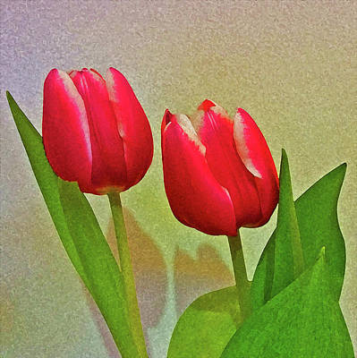 Photograph - Red Tulips by Anne Kotan