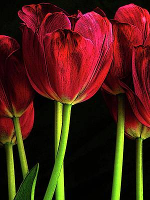 Photograph - Red Tulips by Craig Perry-Ollila
