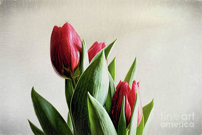 Digital Art - Red Tulips by Elijah Knight