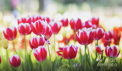 Photograph - Red Tulips Flowers by Jerome Obille