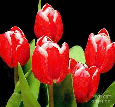 Photograph - Red Tulips I by Janette Boyd