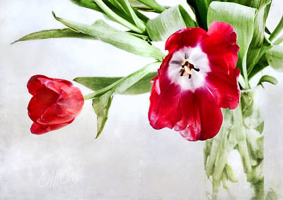 Photograph - Red Tulips In A Clear Glass Vase by Louise Kumpf