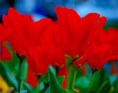 Red Tulips Art Print by JoAnn Lense