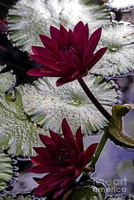 Photograph - Red Twins by Ken Frischkorn