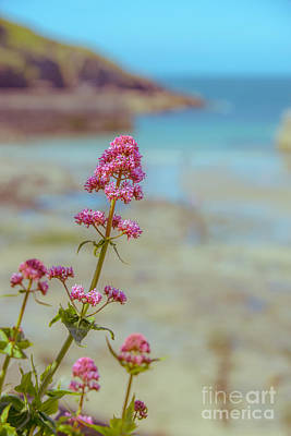 Isaac Photograph - Red Valarian At Port Isaac by Amanda Elwell