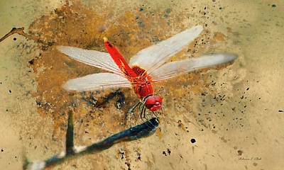 Animals Royalty-Free and Rights-Managed Images - Red Veined Darter Dragonfly by Bellesouth Studio